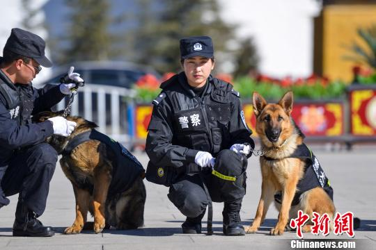 Police dogs patrol Tibet's downtown streets for the first time